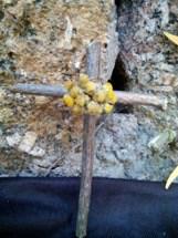 cruz de saúco
